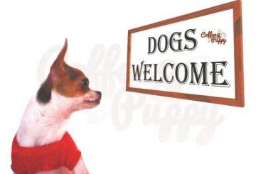 รวบรวมลิงค์-ร้านอาหารน้องหมาเข้าได้